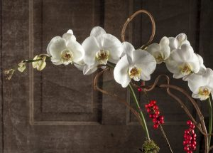Orchids and Berries