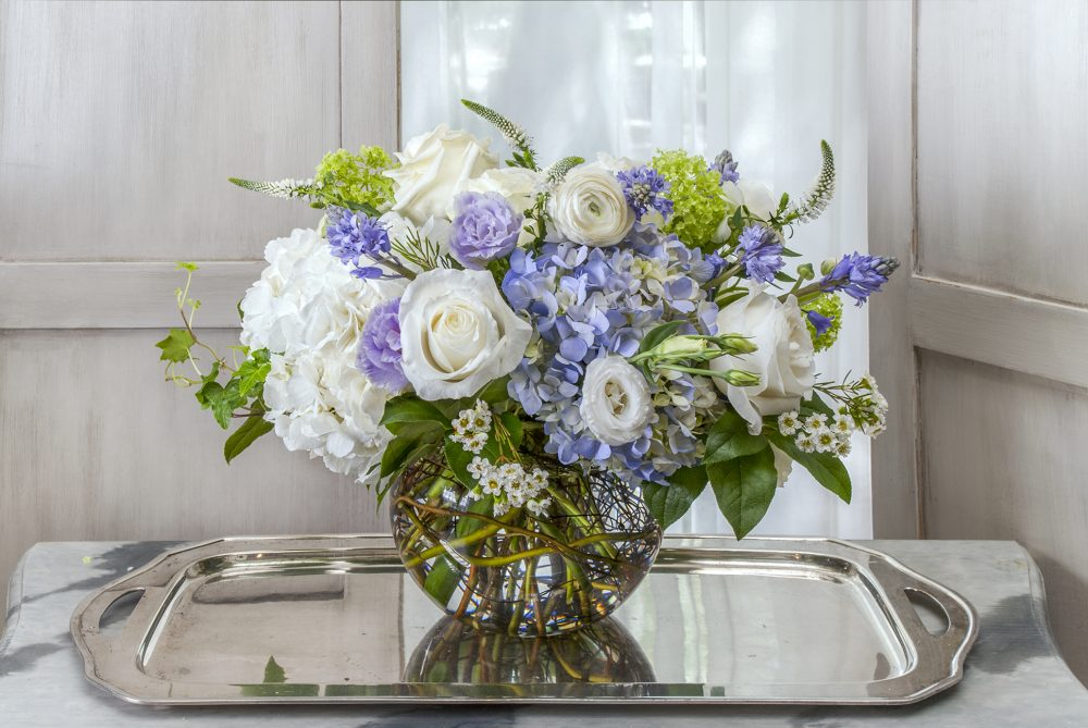 Fresh flowers of bright blue hydrangea, with green and crisp white blossoms.