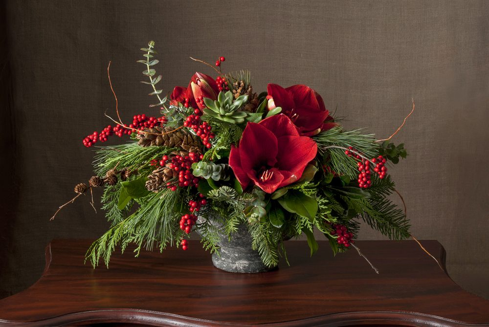 Bright holiday red amaryllis with winter berries and cones in an aged urn delivered
