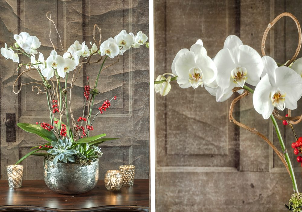 RWF Original, double-stem Phalaenopsis orchid plants with holiday berries and succulents